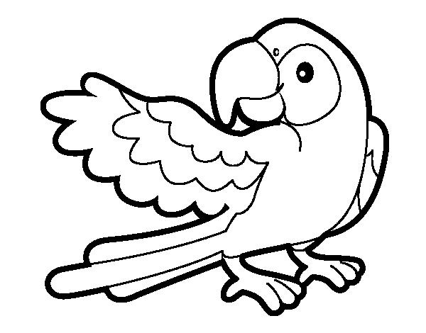 dibujo para colorear-animales-bebeazul.top (3)